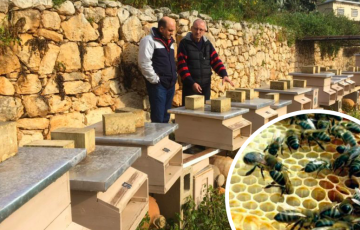Maltese Beekeepers Are The Victims Of 'Copy Paste' EU Laws, Says MEP Candidate